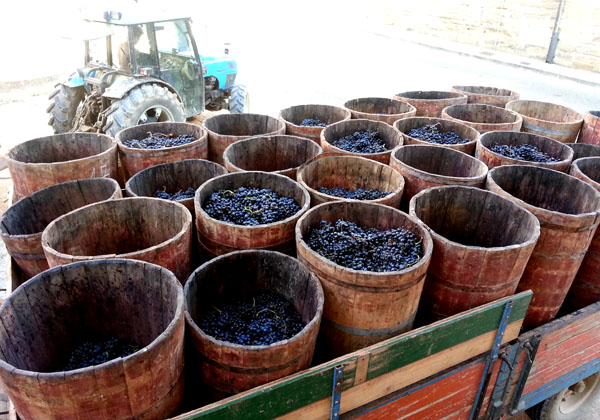 Ruta De Bodegas Y Vino De Rioja Riojatrek