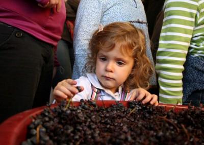 Probando las uvas