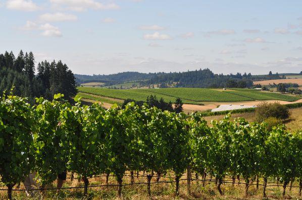 Oregon, a unique wine place